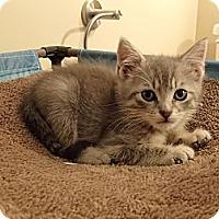 Adopt A Pet :: Simon - Hayward, CA