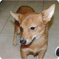 Adopt A Pet :: Todd - Arlington, TX