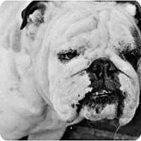 Adopt A Pet :: Fred*adoption pending* - Gilbert, AZ