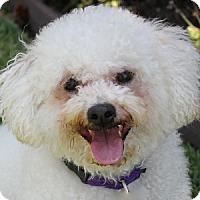 Adopt A Pet :: Kylie - La Costa, CA