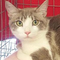 Adopt A Pet :: Sophia - Walnut Creek, CA