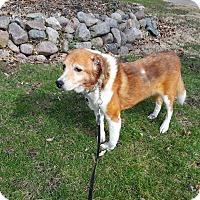 Adopt A Pet :: Cyndee - Aurora, IL