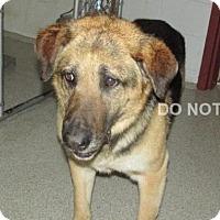 Adopt A Pet :: Cullen - Rocky Mount, NC