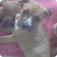 Adopt A Pet :: Merlot - Phoenix, AZ