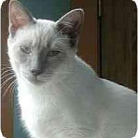 Adopt A Pet :: Spirit - Portland, OR