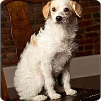 Adopt A Pet :: Amelia - Owensboro, KY