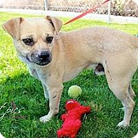 Adopt A Pet :: Pumba - Anaheim, CA