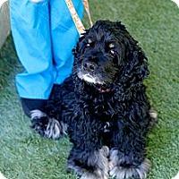 Adopt A Pet :: Eiljah - Mission Viejo, CA