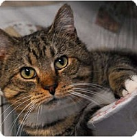 Adopt A Pet :: Tank - Lunenburg, MA