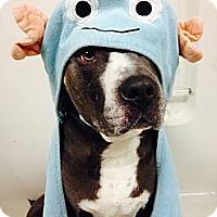 Adopt A Pet :: Jagger - Mission Viejo, CA