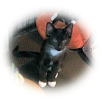 Adopt A Pet :: Duran - Olmsted Falls, OH