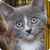Adopt A Pet :: Suzanne - Irvine, CA