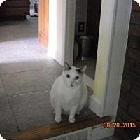 Adopt A Pet :: Lucky - Riverside, RI