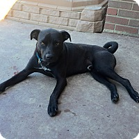 Terrier (Unknown Type, Medium)/Pit Bull Terrier Mix Dog for adoption in New Kensington, Pennsylvania - Andy