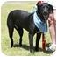 Photo 2 - Labrador Retriever Mix Dog for adoption in Newcastle, Oklahoma - Miss Daisy