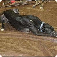 Adopt A Pet :: johnny - Vidor, TX