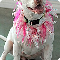 Adopt A Pet :: Usha - Costa Mesa, CA