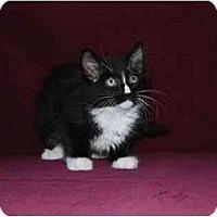 Adopt A Pet :: Pongo - Modesto, CA