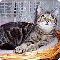 Adopt A Pet :: DARLA (MM) - Little Falls, NJ