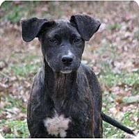 Adopt A Pet :: Chip - Pittsbugh, PA