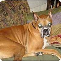 Adopt A Pet :: Dawson - Tallahassee, FL