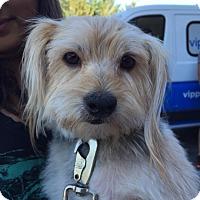 Adopt A Pet :: Rudy - Grass Valley, CA