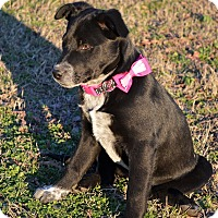 Adopt A Pet :: Delta - Westport, CT