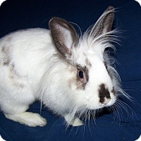Adopt A Pet :: Flopsy - Alexandria, VA