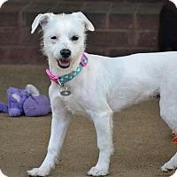 Adopt A Pet :: Sable - Southington, CT
