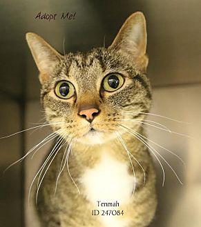 Domestic Shorthair Cat for adoption in Camden, Delaware - Tenmah