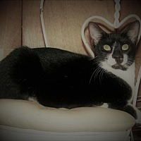 Adopt A Pet :: Eli - Kenner, LA