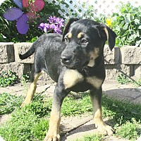 Adopt A Pet :: Howdee - West Chicago, IL