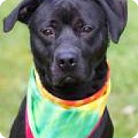 Adopt A Pet :: Jesse - New Albany, OH