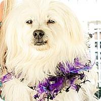 Adopt A Pet :: Fabio - Acton, CA