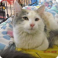 Adopt A Pet :: Alice - Riverside, RI