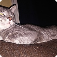 Adopt A Pet :: Rafiki - Trevose, PA