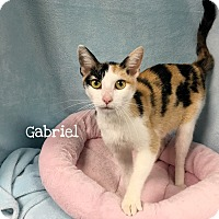 Adopt A Pet :: Gabriel - Foothill Ranch, CA