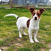 Adopt A Pet :: Marco - Terrell, TX