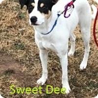 Adopt A Pet :: Dee - Kingman, KS