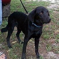 Adopt A Pet :: Blackjack ('Jack') - Smithfield, NC