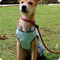 Adopt A Pet :: Olga Yenchi - Seattle, WA