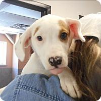 Adopt A Pet :: Noni/ Abby - Osage Beach, MO