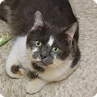 Adopt A Pet :: Zucchinni - Glen Mills, PA