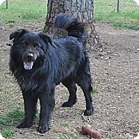 Adopt A Pet :: Grego - Conyers, GA