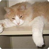 Adopt A Pet :: Johnnie - Mesa, AZ