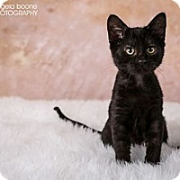 Adopt A Pet :: Clyde - Eagan, MN