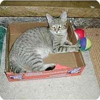 Adopt A Pet :: Fudge - Toronto, ON