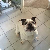 Adopt A Pet :: Tyson - Strongsville, OH