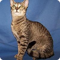 Adopt A Pet :: Jagger - Colorado Springs, CO