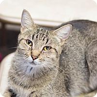 Adopt A Pet :: Genesis - Fountain Hills, AZ
